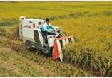 久保田4LBZ-145G(PRO588i-G)玉米收获机