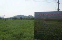 怀宁县油菜机械化生产示范片油菜丰收在即