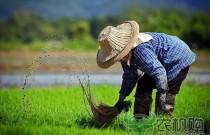 《方案》:建立以绿色生态为导向的农业补贴制度