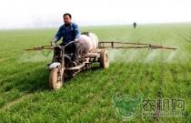 """高青县:越冬小麦""""杀菌""""实现机械化"""