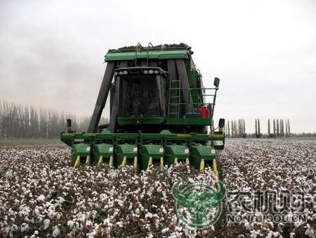 沙湾县棉花机采率突破95%  再创历史新高