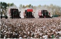 2017年棉花生产机具补贴有望加大