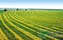 """农业部答复""""提高种粮补贴,增加农民收入""""建议"""