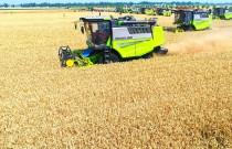 收小麦和杂粮,我为什么选择谷王TE90收割机