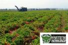 农业产业园 耕耘新动能