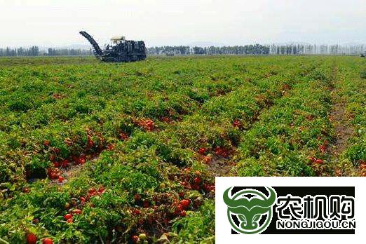 农业产业园 耕耘新动能1
