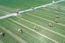 为农业插上科技翅膀