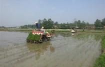 立夏时节水稻插种忙