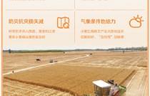 夏粮生产:量的丰收 质的提升