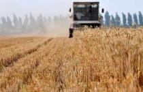 山东小麦机收告捷 6000余万亩夏粮颗粒归仓
