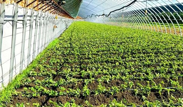 辽宁省每年投入3000万元支持设施农业发展