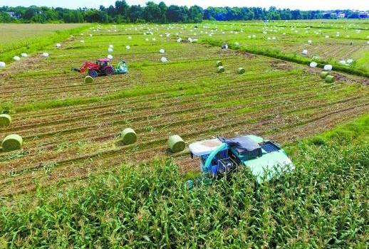 青海牧草生产耕种收基本实现全程机械化1