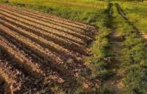 耕地轮作休耕制度试点工作座谈会在滁州召开