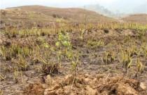 分类施策消除土地弃耕现象