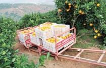 发展果园机械化,路在何方?