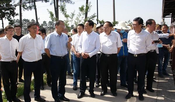 """""""藏粮于技"""":让水稻种植更轻简高效"""