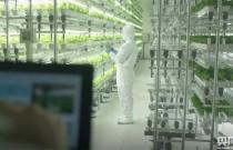 [两会观察] 政协委员杨国强:发展现代农业 打造规模化无人农场