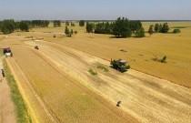 2020年全国大规模小麦跨区机收全面展开