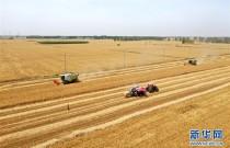 效率提高 模式变革——河南麦收新观察