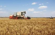 安徽省已收获小麦超1100万亩