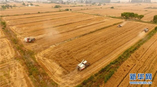"""新型农业经营主体破解""""谁来种地""""问题"""