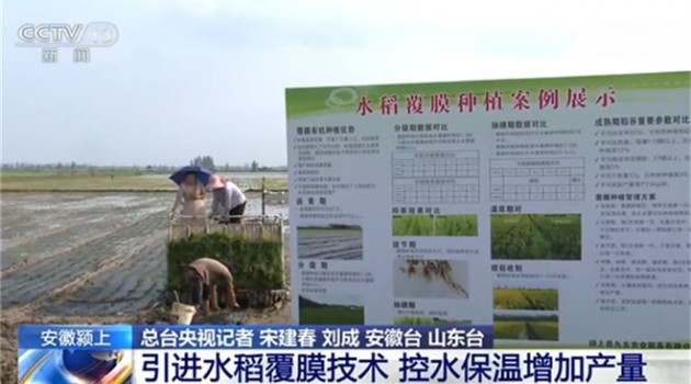 农业农村部:全国夏播粮食已完成96%