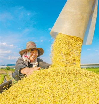 产量增120.8万吨,总产创历史新高: 今年夏粮生产再获丰收